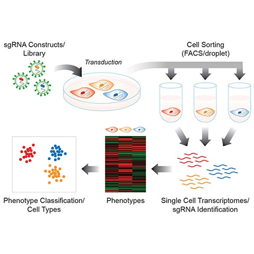 Transcription Profiling / Cell Barcoding
