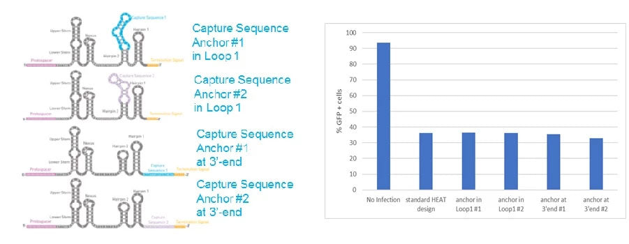 Cellecta shows insertion of 10X Genomics capture sequences in HEAT-tracr sgRNA does not affect screen efficacy
