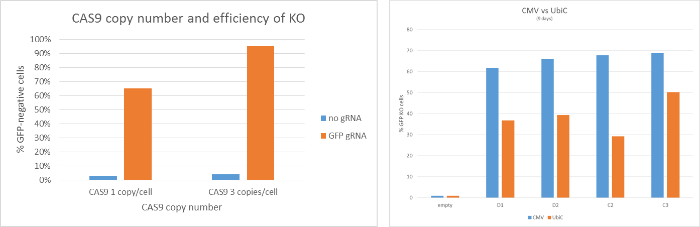 CAS9 copy number effect on knockout