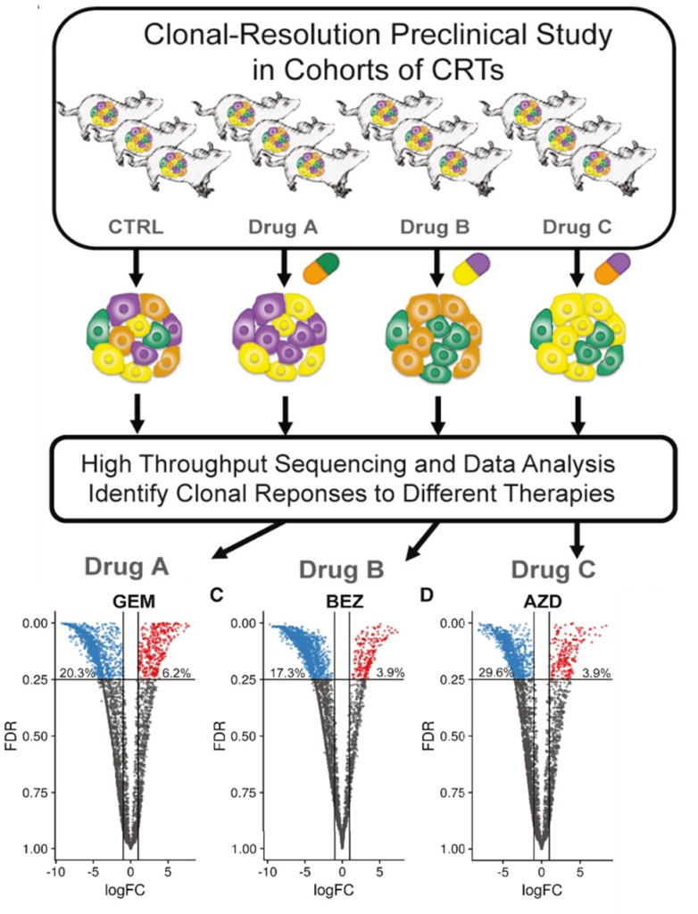 Clonal replicate tumors generated with CloneTracker barcodes