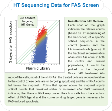 FAS induced apoptosis RNAi rescue screen scatter plot