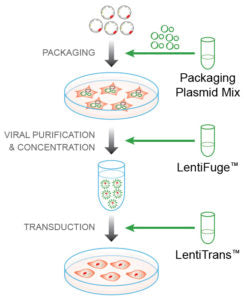 lentiprep reagent set for packaging, viral concentration and transduction