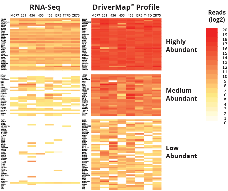 NGS read levels detected with RNA-Seq and DriverMap for selected high-abundant (10K-100K copies per sample), medium-abundant (1,000-10,000 copies per sample), and low-abundant transcripts (100-1,000 copies per sample) in 50ng of total RNA from eight common cancer cell lines.