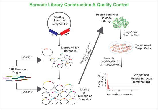 Cellecta Clonal Cell Tracking Barcode Library construction and quality control diagram