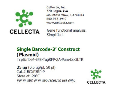 Single Barcode-3' Construct in pScribe4M-RFP-Puro, compatible with CloneTracker XP 5M/50M (plasmid)