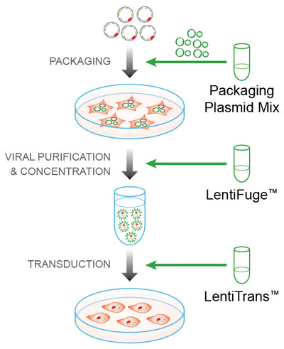 LentiPrep™ Lentiviral Reagent Set with Fluorescent Control for Packaging and Transduction