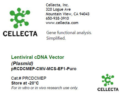 cDNA Cloning Vector with CMV Promoter (CMV-MCS-EF1-selection)