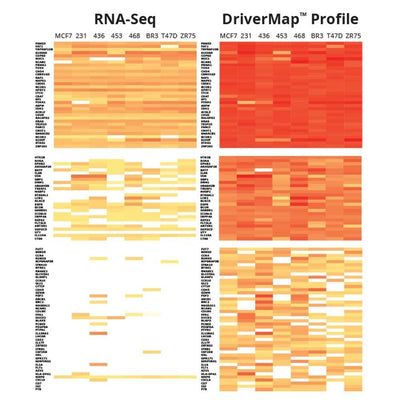 DriverMap Targeted RNA Sequencing Service