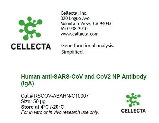 Human anti-SARS-CoV and CoV2 NP Antibody (IgA)