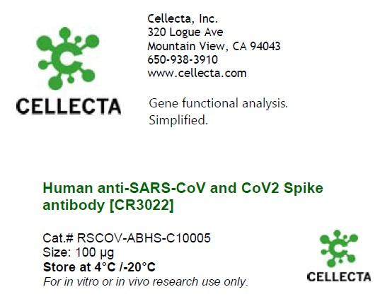 Human anti-SARS-CoV and CoV2 Spike Antibody [CR3022]