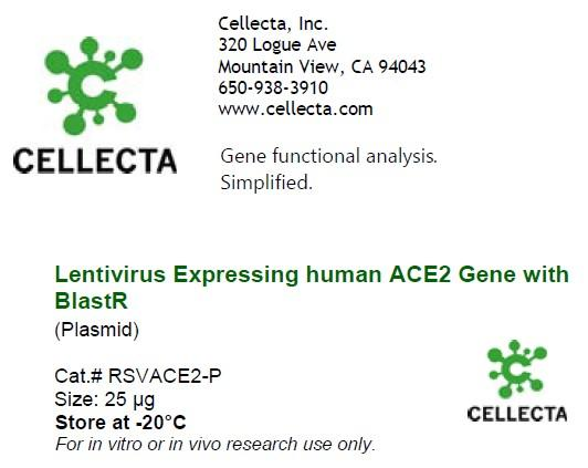 Lentivirus Expressing human ACE2 Gene with BlastR