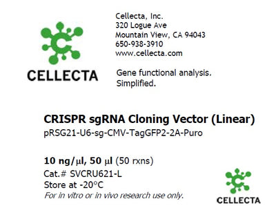 Standard sgRNA U6 Promoter Expression Vector (linearized, ready-for-cloning)