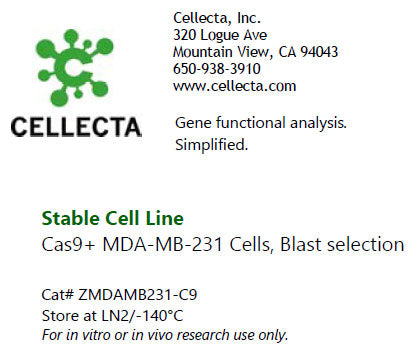 MDA-MB-231 Cells Expressing Cas9 Variants, Blast selection
