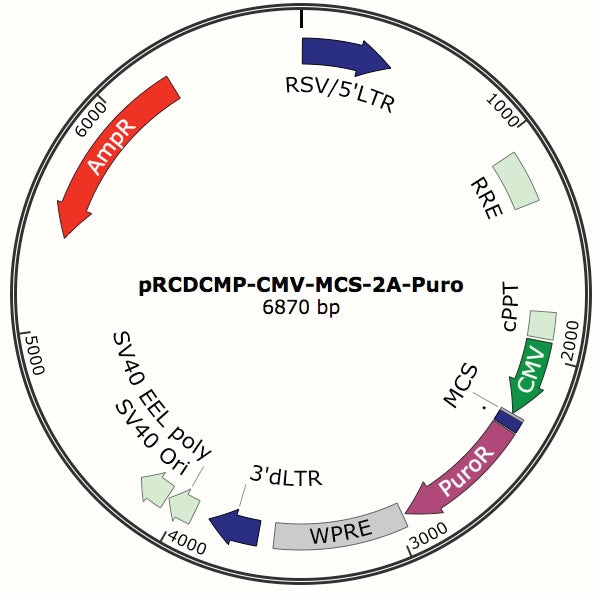 Custom Lentiviral cDNA Constructs