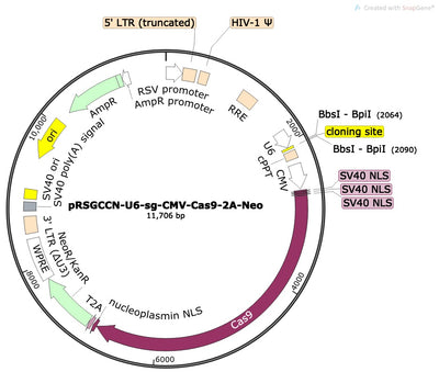 CRISPR sgRNA Vector with U6 Promoter and Cas9 (linearized, ready-for-cloning)