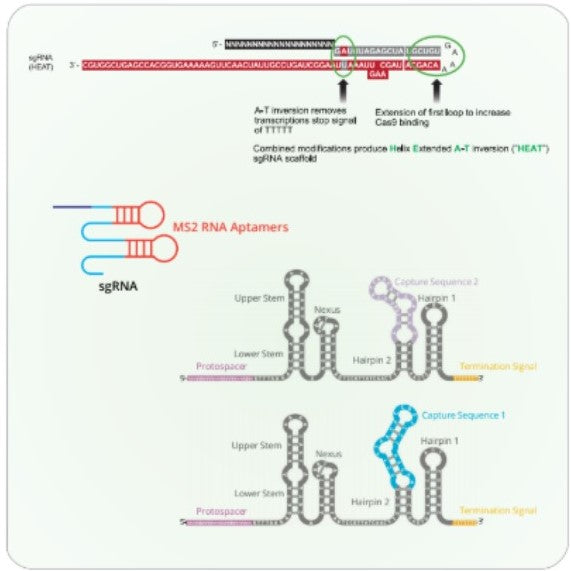 Design and Synthesis of Oligonucleotides
