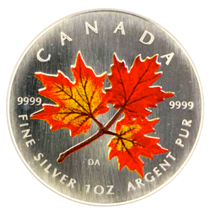 2001 Silver maple Leaf with Color-Autumn