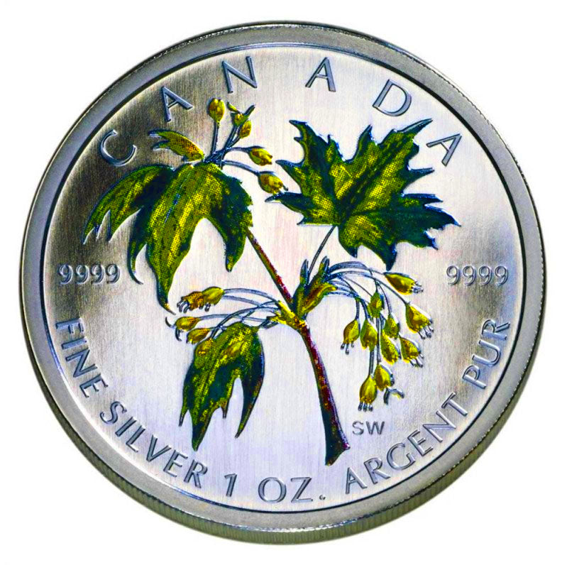 2003 Silver maple Leaf with Color-Summer