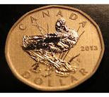 2013 Canada Specimen  Loonie Blue-Winged Teal