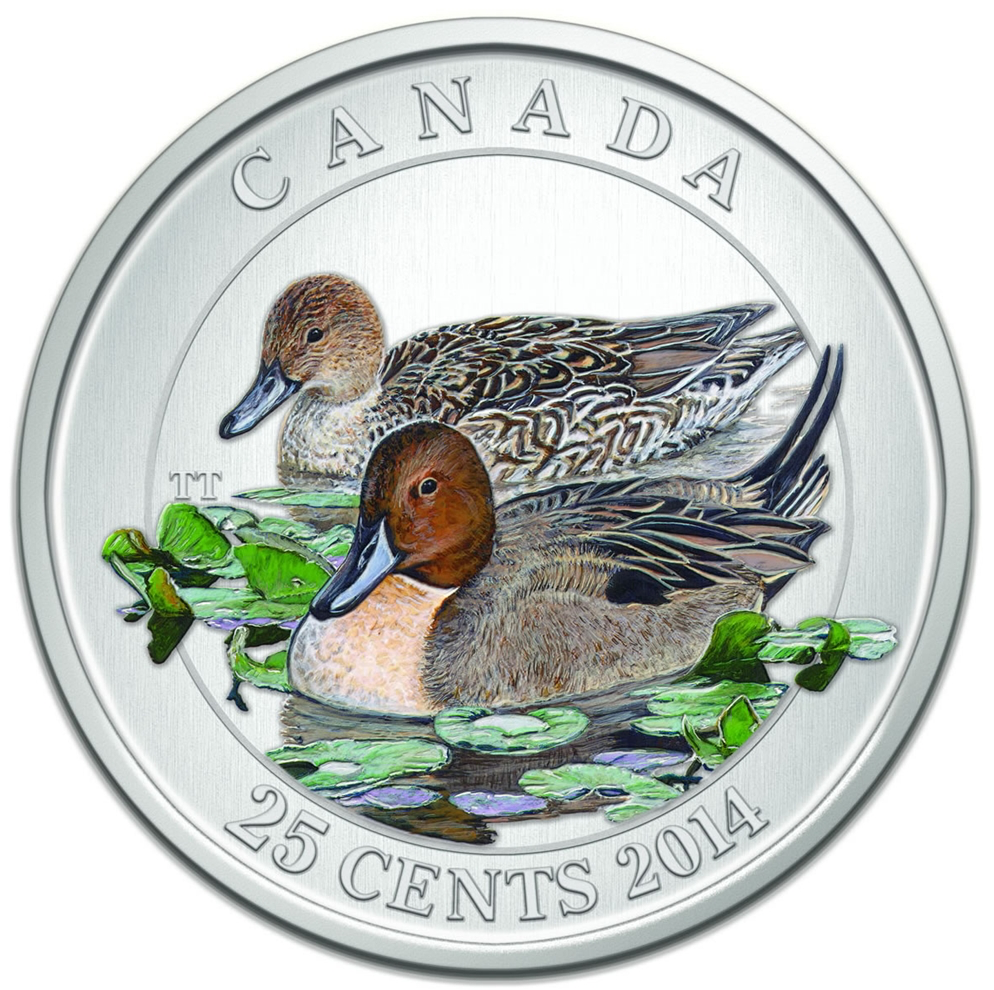 2014 Canada Cupronickel Quarter - 25 Cents Ducks of Canada-The Pintail