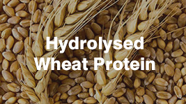 Wheat Proteins