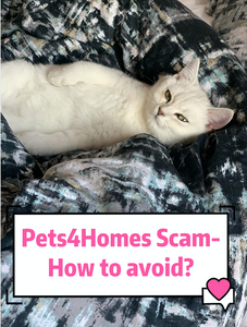 Pets4Homes Kitten scam/ Pet scam alert !!!- How to avoid to get scammed?