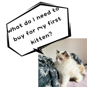 What do I need for my firtst kitten? UK best cat essentials list- Cherish Lewis Ragdoll Cattery UK