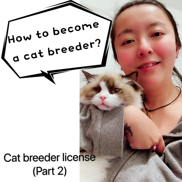 How to become a cat breeder? Selling animal as a pet license UK (Part 2)- Cherish Lewis Cattery