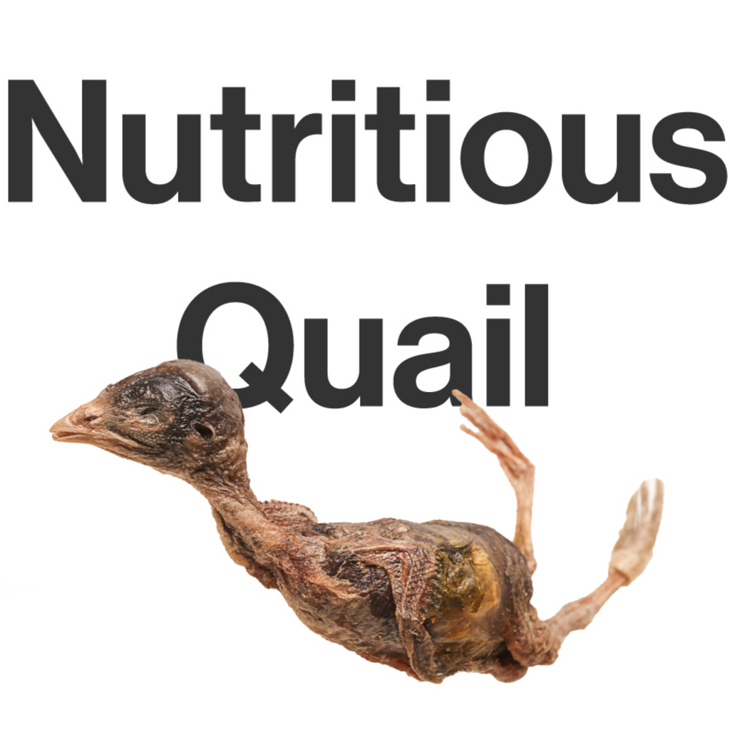 Pet Snack for Cat Freeze-Dried Quail 冻干鹌鹑
