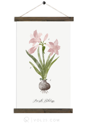 Amaryllis Study |  unique wall hanging art | more options