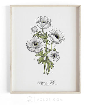 Anemone Study Vol.1 | Scientific Textured Cotton Canvas Art Print | VOL25
