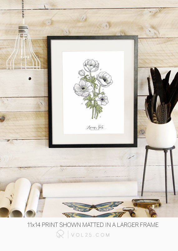 Anemone Study Vol.1 | Scientific Textured Cotton Canvas Art Print in 4 Sizes | VOL25 - vol25