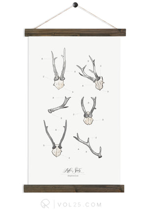 Antler Study Roe |  unique wall hanging art  | More options
