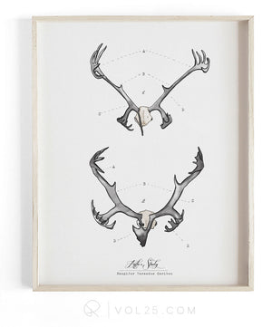 Antler Study Caribou | Textured Cotton Canvas Art Print | VOL25