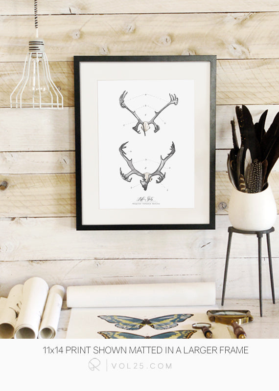 Antler Study Caribou | Nordic Collection | Textured Cotton Canvas Art Print in 4 Sizes | VOL25