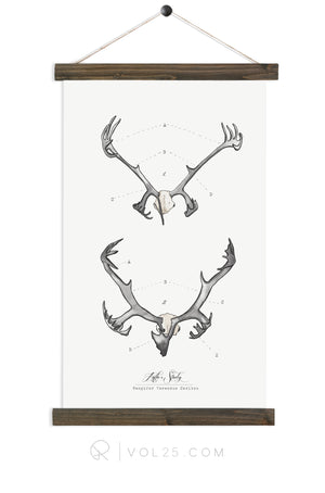 Antler Study Caribou |  unique wall hanging art  | More options