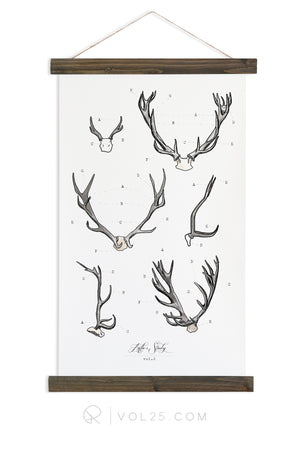Antler Study Study Vol.2 | Canvas Wall hanging | more options VP201 - vol25