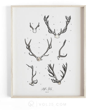 Antler Study Vol.2 | Scientific Textured Cotton Canvas Art Print | VOL25