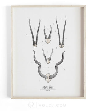 Antler Study Vol.3 | Scientific Cotton Canvas Art Print | VPR10P