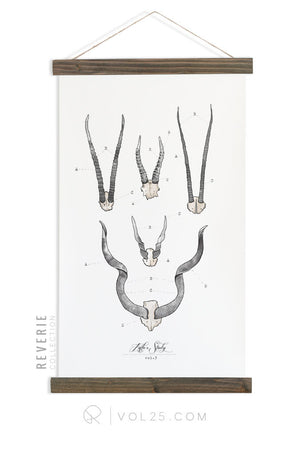 Antler Study Vol.3 | Reverie Collection Scientific Canvas Wall hanging | more options VPR10 - vol25