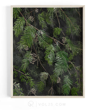 Black Pine | Textured Cotton Canvas Art Print | VOL25