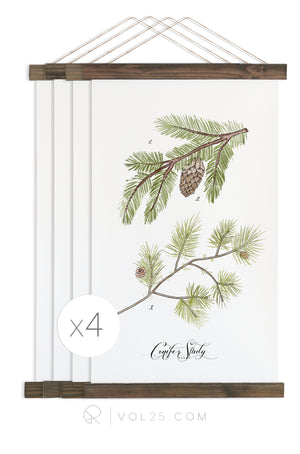 Conifer Studies | Curated Art Set 4 unique wall hangings  | more options
