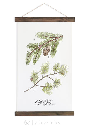 Conifer Study Vol.1 | Scientific Canvas Wall hanging | more options VPC201 - vol25