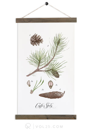 Conifer Study Vol2 | Canvas Wall Hanging | More options QZ101