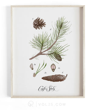 Conifer Study Vol2 | Textured Cotton Canvas Art Print in 9 Sizes | VOL25