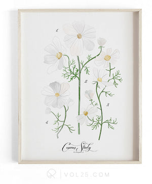 Cosmos Study | Textured Cotton Canvas Art Print  | VOL25