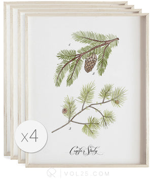 Conifer Studies | Curated Art Set | 4 Textured Cotton Canvas Art Prints | VOL25