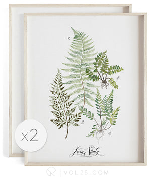 Fern Studies | Curated Art Set | 2 Textured Cotton Canvas Art Prints | VOL25