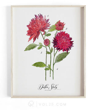 Dahlia Study Scarlet | Textured Cotton Canvas Art Print | VOL25