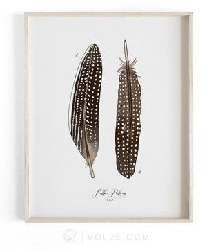 Feather Patterns Vol.4 | Scientific Textured Cotton Canvas Art Print | VOL25